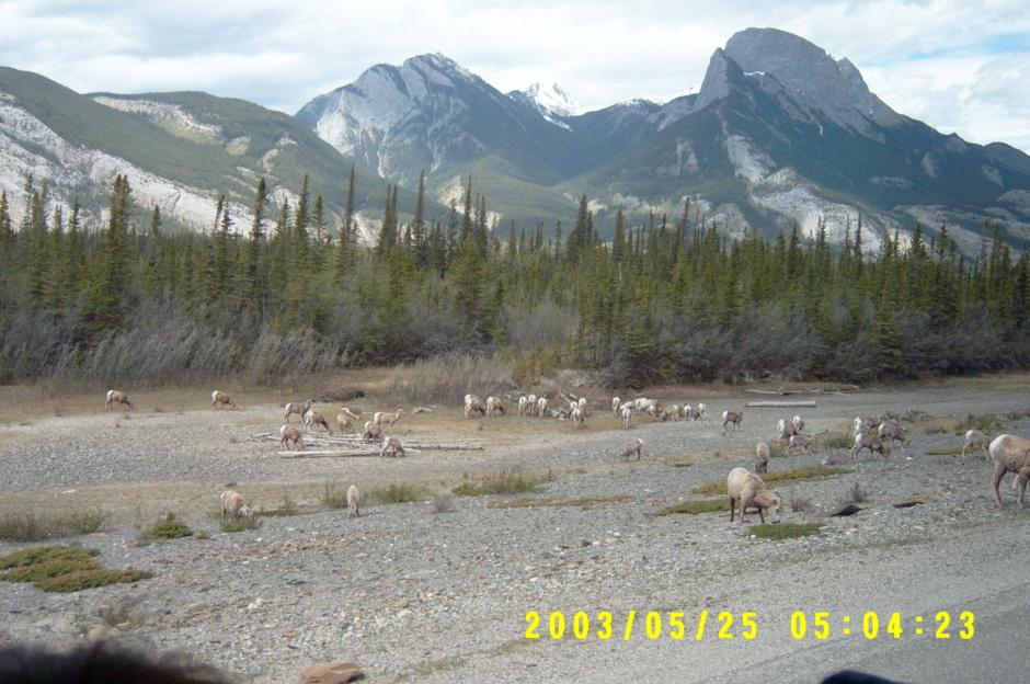 록키산맥-카나다.jpg